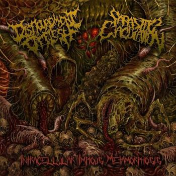 Parasitic Ejaculation / Disfigurement of Flesh - Intracellular Impious Metamorphosis. Split CD